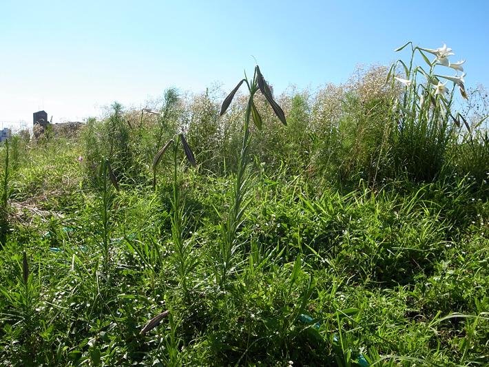 The grass roof of midsummer